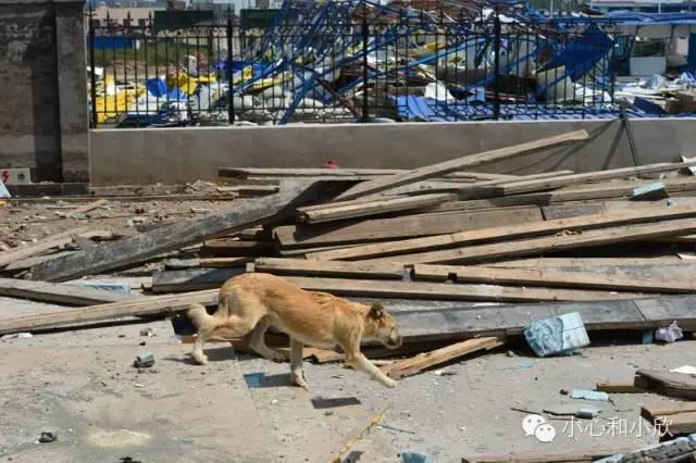 爆炸现场的一只黄狗
